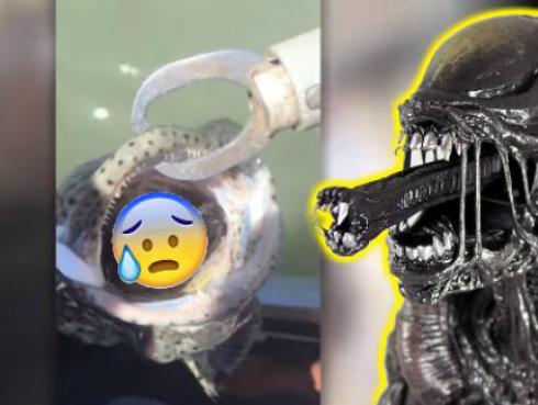 Ni te imaginas lo que salió de la boca de este pez [VIDEO]