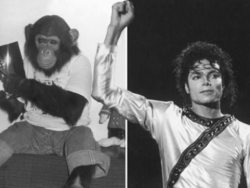 ¡Increíble, pero cierto! Bubbles, el famoso chimpancé de Michael Jackson,  subastará sus 'pinturas'