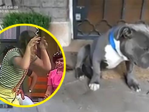 ¡Video del 'perrito arrepentido' es furor en YouTube!