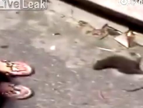 Se burló de una rata y jamás pensó que terminaría así [VIDEO]