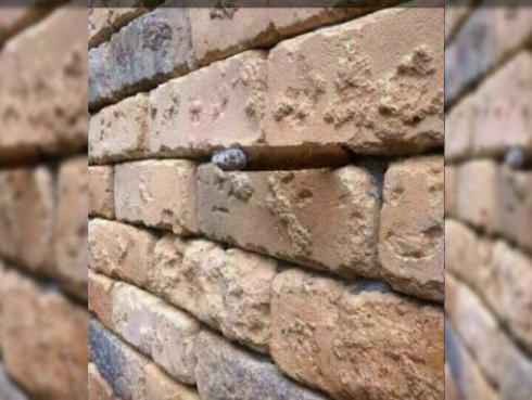 Esta ilusión óptica es furor en Facebook ¿Ya la descubriste?