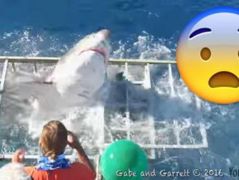 ¡Tiburón ingresó a jaula de seguridad y turista se salva de milagro! [VIDEO]